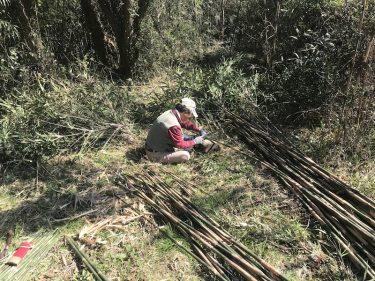 【ししとう農家への道】資材は野から。垣根用の竹の切り出し50本!