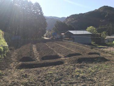 【ししとう農家への道】農作業が本格的にスタート!畝ができたら畑に見える。元肥散布と畝立て作業。